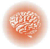 Whole human brain — Fotografia Stock