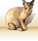 Gato Sphynx — Fotografia Stock
