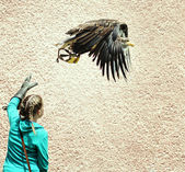 Bald eagle and falconer girl — Stock Photo