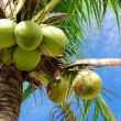 Coconut tree — Stock Photo #10863312