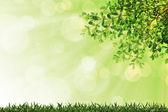 绿草和具有选择性焦点离开背景 — 图库照片
