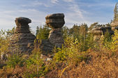 Rocky Mushrooms — Стоковое фото