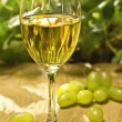 Stock Photo: White wine glass on table