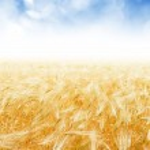 oogst achtergrond — Stockfoto