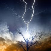 Tree struck by lightning — Stock Photo