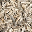 Sunflower seeds texture — Stock Photo