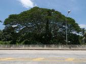 большое дерево — Стоковое фото