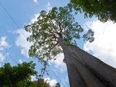 Een grote boom — Stockfoto