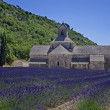 Abbey of Senanque,Provence,France — Stock Photo #11614033
