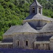 Abbey of Senanque,Provence,France — Stock Photo #11614107