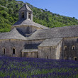 Abbey of Senanque,Provence,France — Stock Photo #11614139