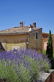 Lavender in a small village in Provence — Stock Photo