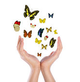 Hand holding butterflies — Stock Photo