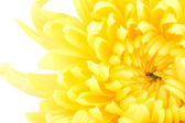 Beautiful yellow flower isolated on white background — Stock Photo