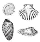 4 壳 — 图库矢量图片