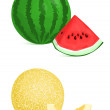 Melon and watermelon — 图库矢量图片