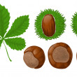 Chestnuts and leaf — Stock Vector