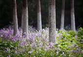 Photo de paysage de forêt au printemps — Photo