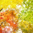 Trees in fall colors — Stock Photo