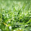 Stock Photo: Wet grass