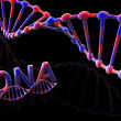 Stock Photo: DNA-3d