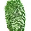 Fingerprint of grass - Stock Photo