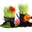 Watering can with grass & flowers — Stock Photo