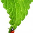Stock Photo: Ladybug on leaf