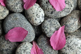 Smooth stones with flower petals — Stock Photo