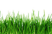 Green grass isolated — Stock Photo