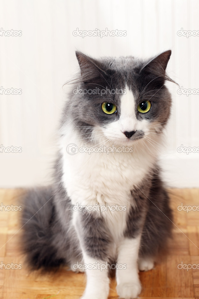Cat staring — Stock Photo #10838184