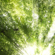 Sunburst through trees — Stock Photo #10840690