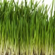 Grass — Stock Photo #10842075