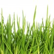 Fresh grass after a rain — Stock Photo