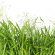 Green grass — Stockfoto #10842507