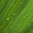Water drops on leaves — Stock Photo #10843288
