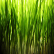 Stock Photo: Green grass lit at night