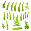 ferns — Stock Photo #10843859