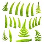 Ferns — Stock Photo