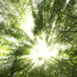 Sunburst through trees — Stock Photo