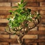 Árbol de los bonsais — Foto de Stock