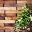Bonsai tree — Stock Photo #10846721