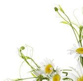 Flower design — Stock Photo
