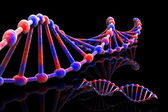 DNA - 3d — Stock Photo