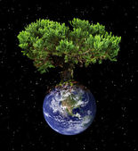 Earth tree — Stock Photo