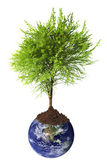 Tree growing from earth — Stock Photo