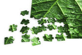 Puzzle of a leaf — Stock Photo