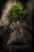 Tree ready to be planted — Stockfoto