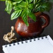 Herbs and notebook. — Stock Photo