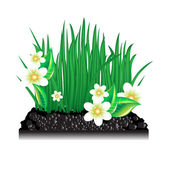 Garden grass with blossoming flowers and ground — Stock Vector